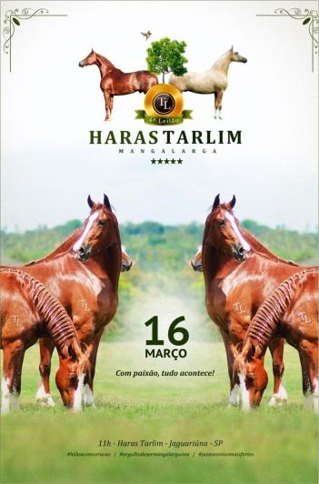 4º Haras Tarlim