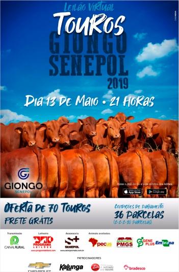 Virtual Touros Giongo Senepol 2019