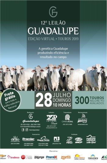 12º Leilão Guadalupe - Touros
