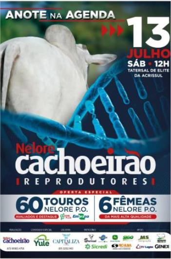 Leilão Nelore Cachoeirão - Reprodutores