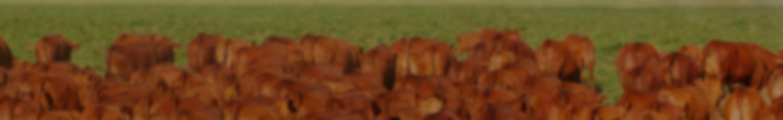 Background do leilão