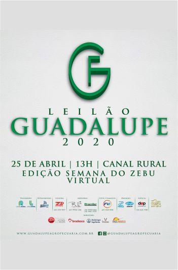 Leilão Guadalupe 2020
