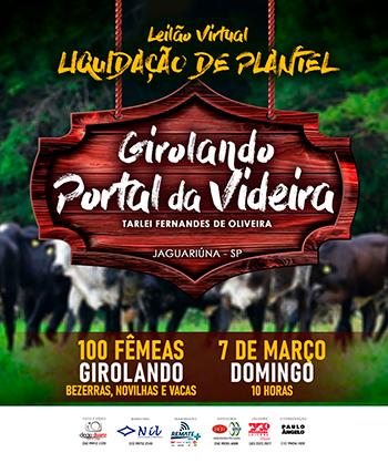 Leilão Virtual Liquidação de Plantel Girolando Portal da Videira