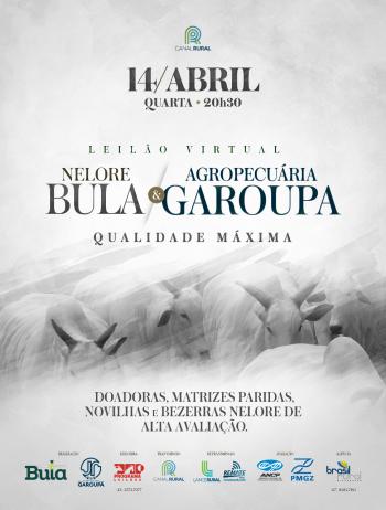 Leilão Virtual Nelore Bula & Agropecuária Garoupa