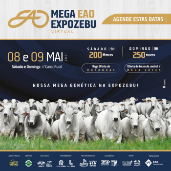 Mega EAO ExpoZebu Virtual - Fêmeas