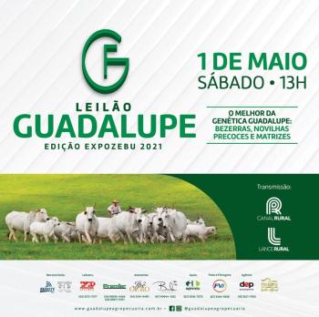 Leilão Guadalupe Edição ExpoZebu 2021