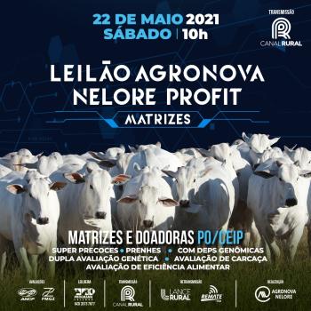 Leilão Agronova Nelore Profit - Matrizes