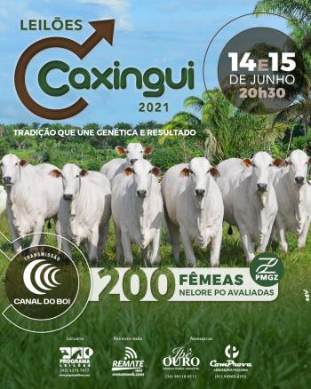 Leilões Caxingui 2021 - 1° Etapa