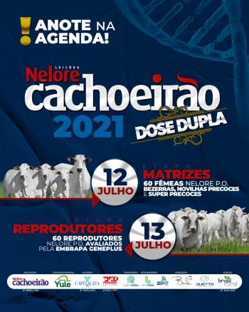 Leilões Nelore Cachoeirão 2021 - 2° Etapa