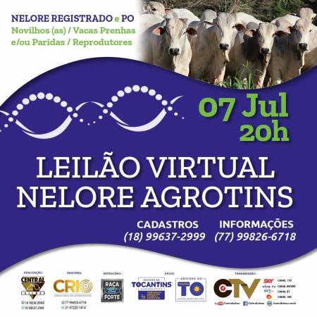 Leilão Virtual Nelore Agrotins