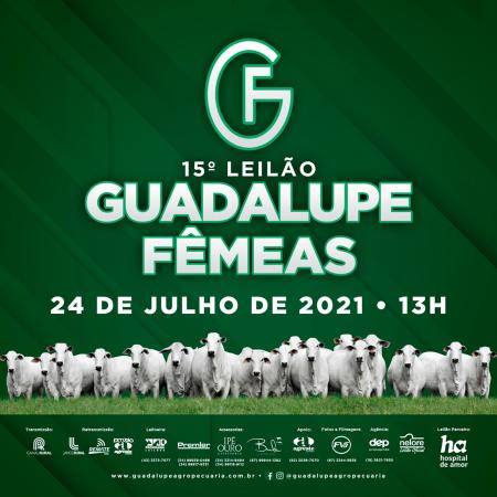 15° Leilão Guadalupe - Etapa Fêmeas