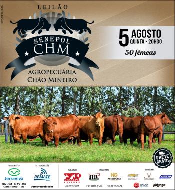 Leilão Senepol CHM - Agropecuária Chão Mineiro | Matrizes