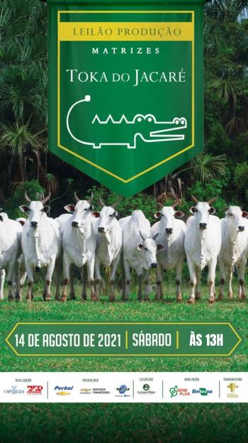 Leilão Produção Matrizes Toka do Jacaré