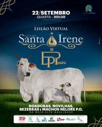 Leilão Virtual Nelore Santa Irene & EP Pecuária