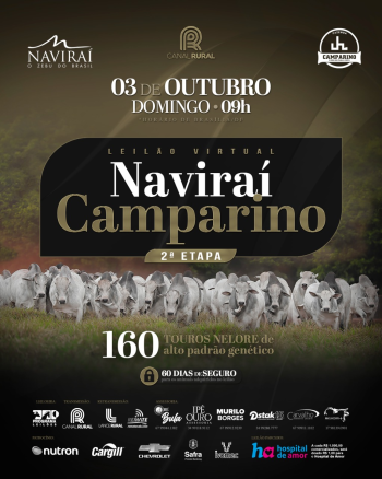 Leilão Virtual Naviraí Camparino - Touros