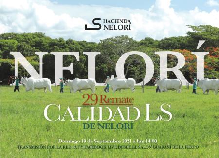 29° Remate Calidad LS de Nelorí