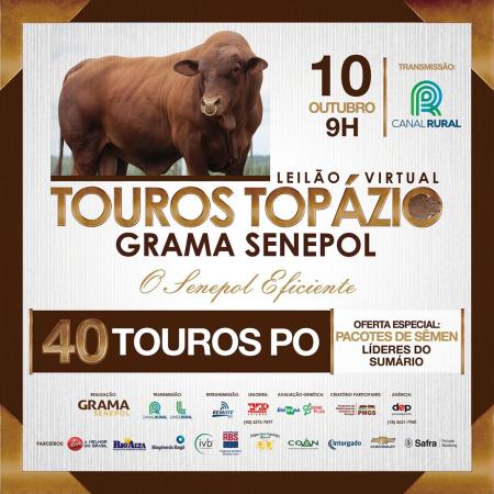 Touros Topázio Grama Senepol - O Senepol Eficiente
