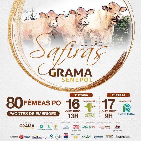 Leilão Safiras Grama Senepol - 17/10